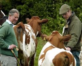 Принц Уильям будет изучать сельское хозяйство в Кембриджском университете.