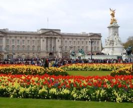 Королева ищет садовника.