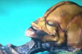 Земля под контролем пришельцев, чилийский карлик.