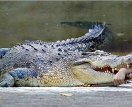 Австралия. Искупаться и закончить жизнь в пасти крокодила.