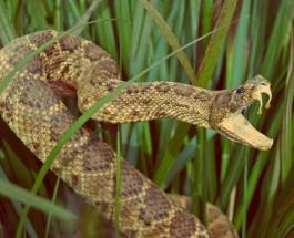 Змеи убивают ежегодно 100 тысяч человек.