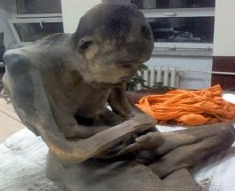 200 летний буддийский монах все еще жив.