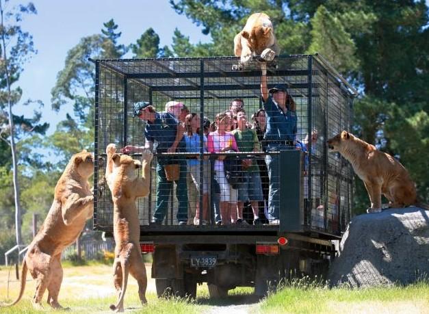 Отпуск в Новой Зеландии. Зоопарк, где люди в клетках. Видео.
